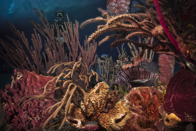 Underwater_Composite