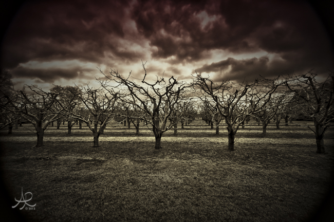 Jordan Orchard